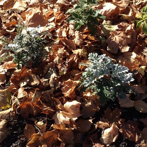 Gardening Tips Raking leaves