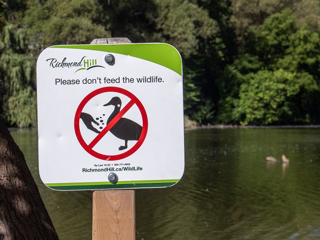 Mill Pond Park - Don't Feed the Wildlife sign