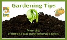 Gardening Tips - Pumpkin recipes